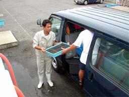 (写真)稚エビの入ったカゴを車に積む