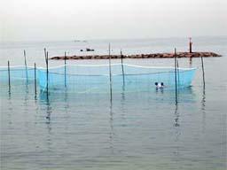 (写真)放流場所に設置した囲い網